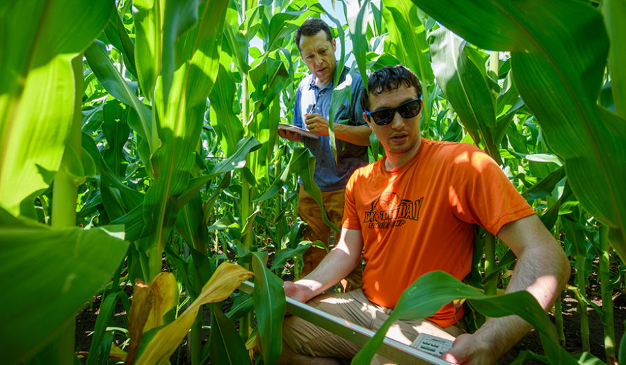 man in cornfield with whiteboard