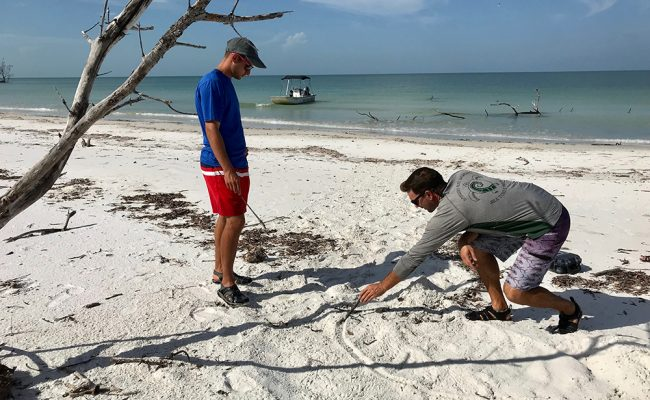 Two students on beach looking at turtle nests
