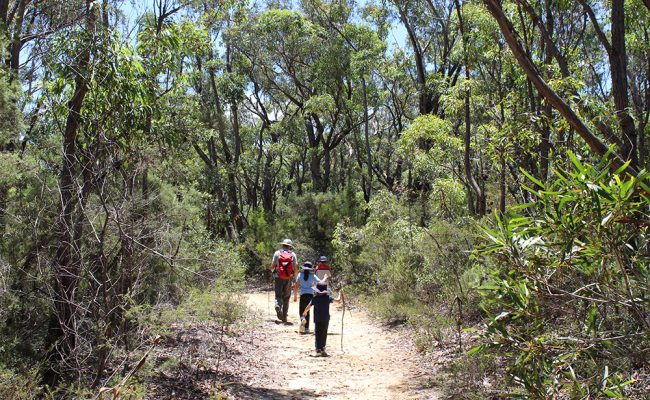 Researcher and children walking in forest in Australia