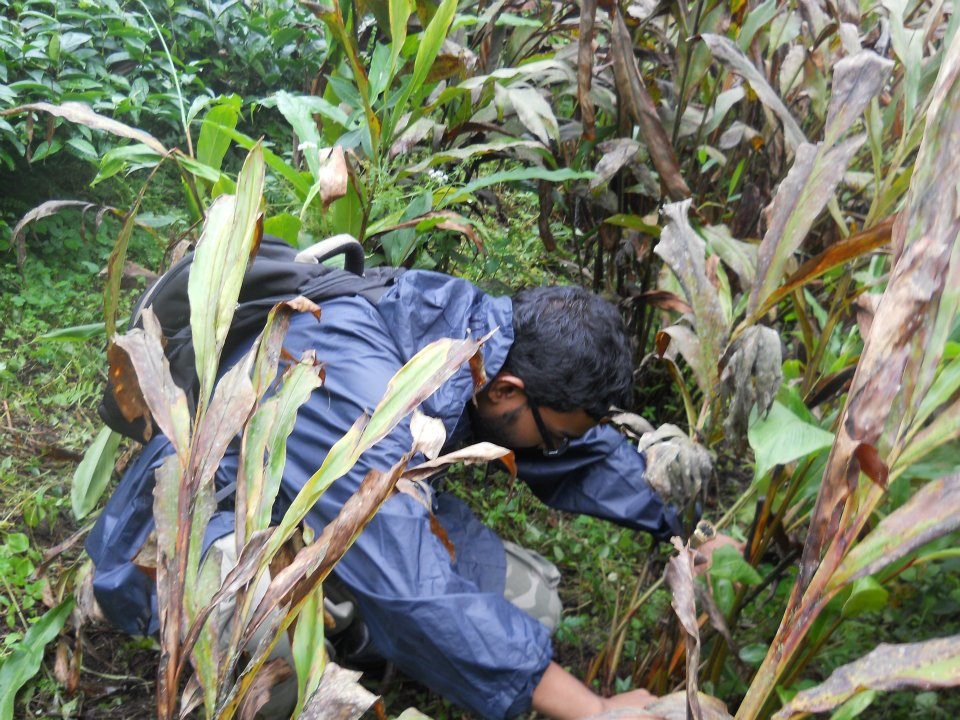 Picture of Abhinav conducting fieldwork in the Himalayan cardamom plantations