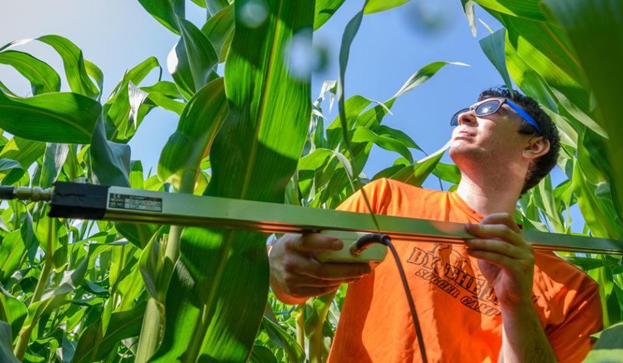 Eli Baldwin in cornfield