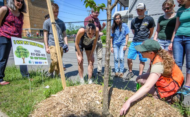 DCR Foresters explain how to plant street trees effectively