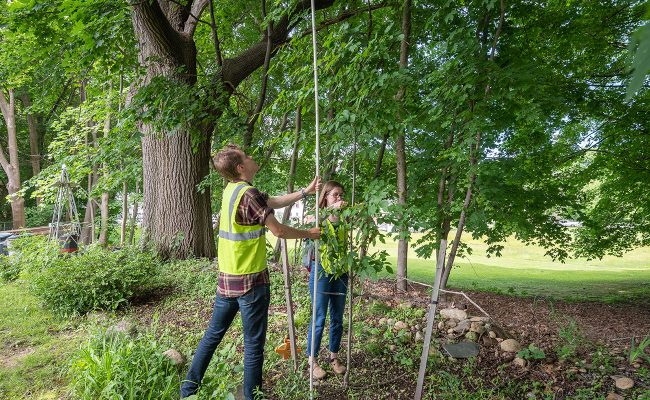 Tree survey at the Hadwen Arboretum