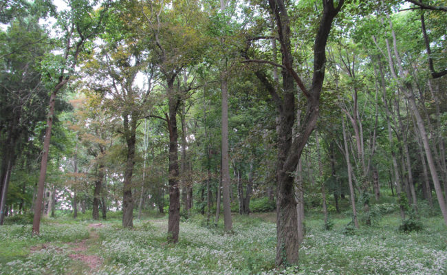 Hadwen Arboretum, Worcester