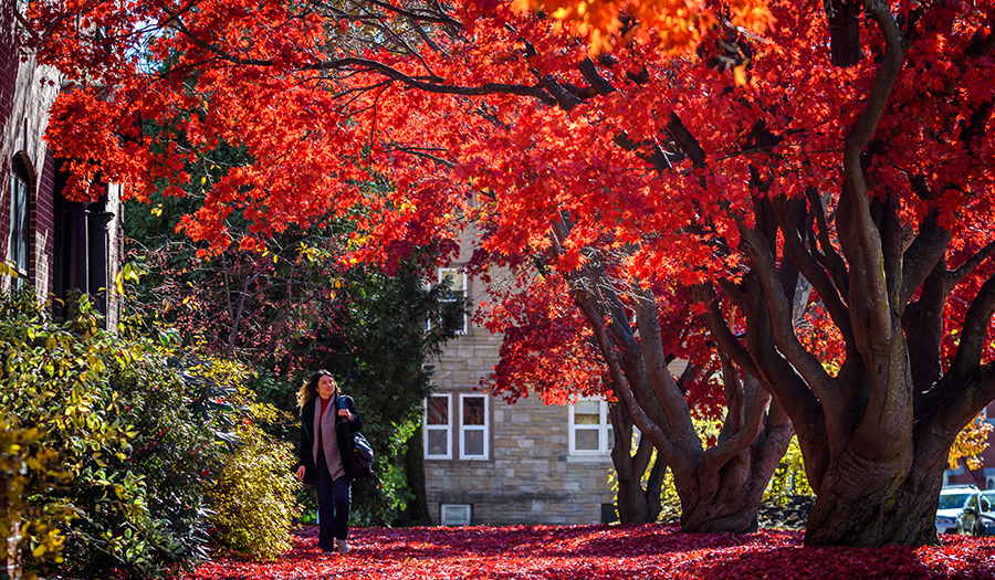 fall trees with woman walking near Clark building